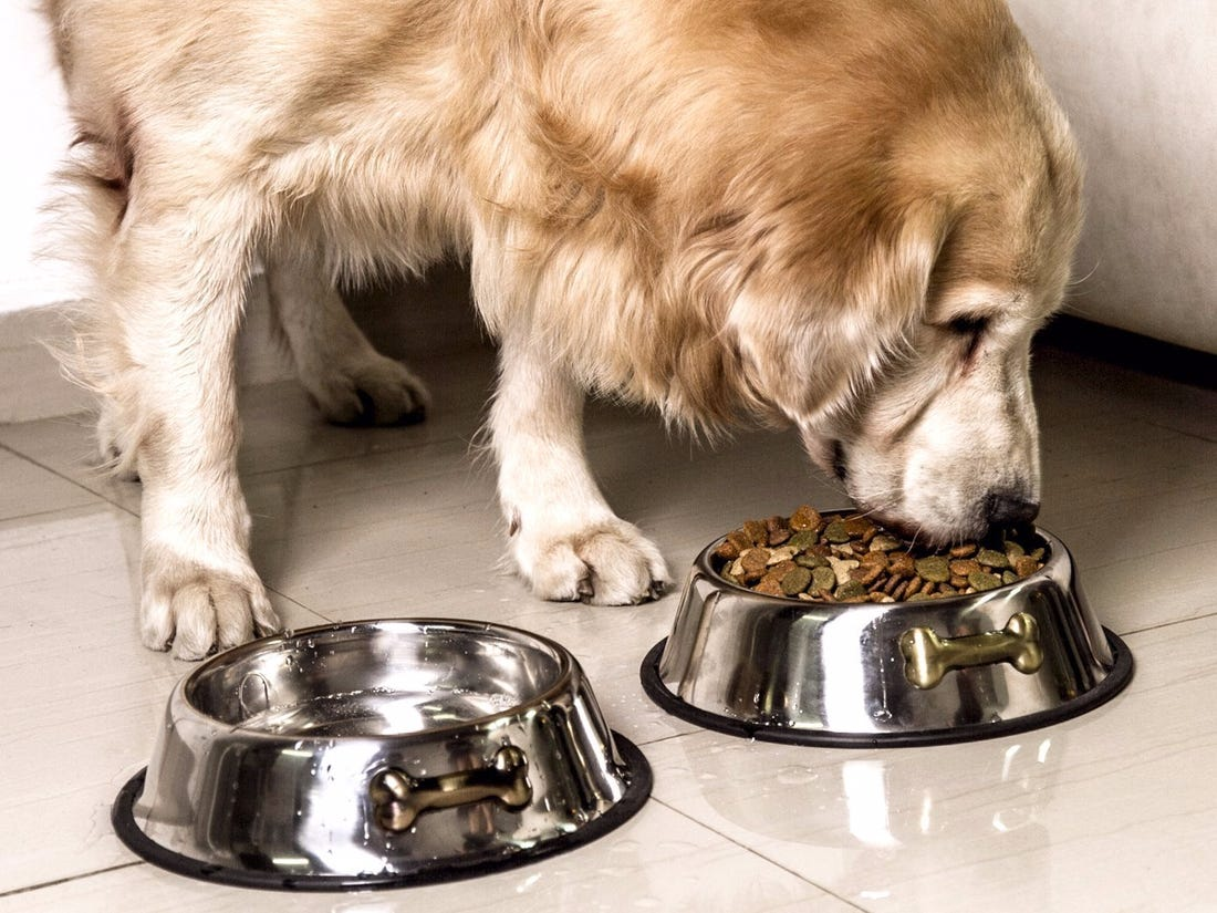 Should You Choose Stainless Steel Dog Dishes